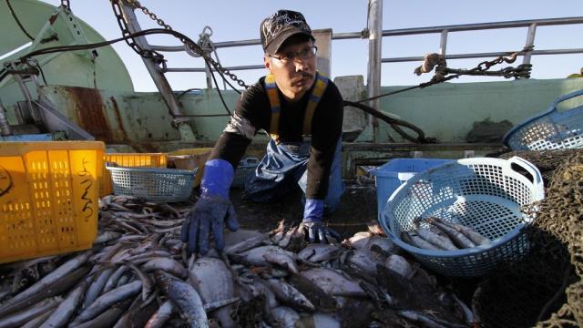 рыболовные суда из японии